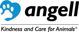 Angell Logo color