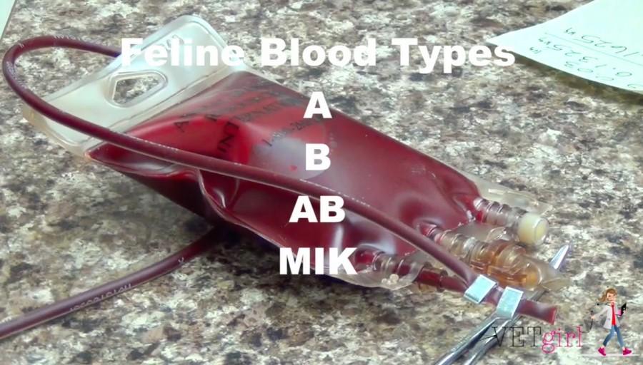 Feline Blood Type video