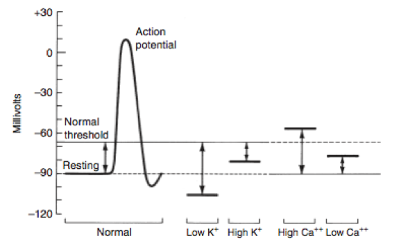 Dibartola's Fluid Therapy chart on the effect of electrolytes on the action potential