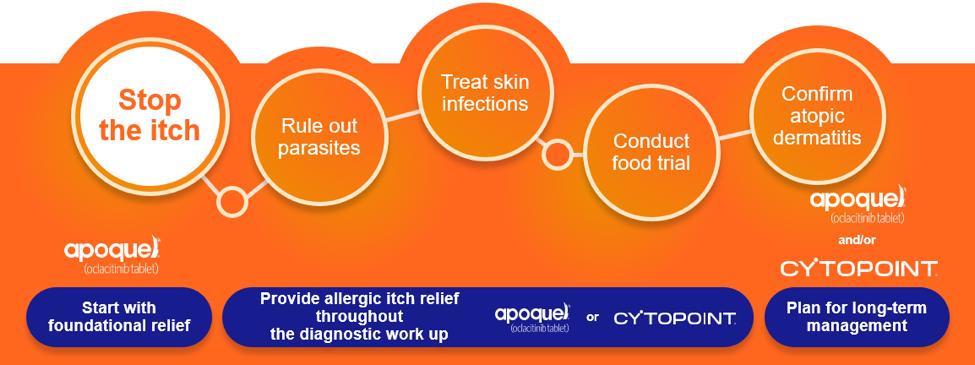 fadt food allergy diet trial vet