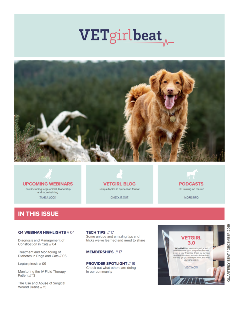 VETgirl enewletter veterinary Q4