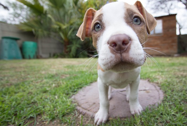 How to pick a puppy VETgirl online Veterinary CE blog