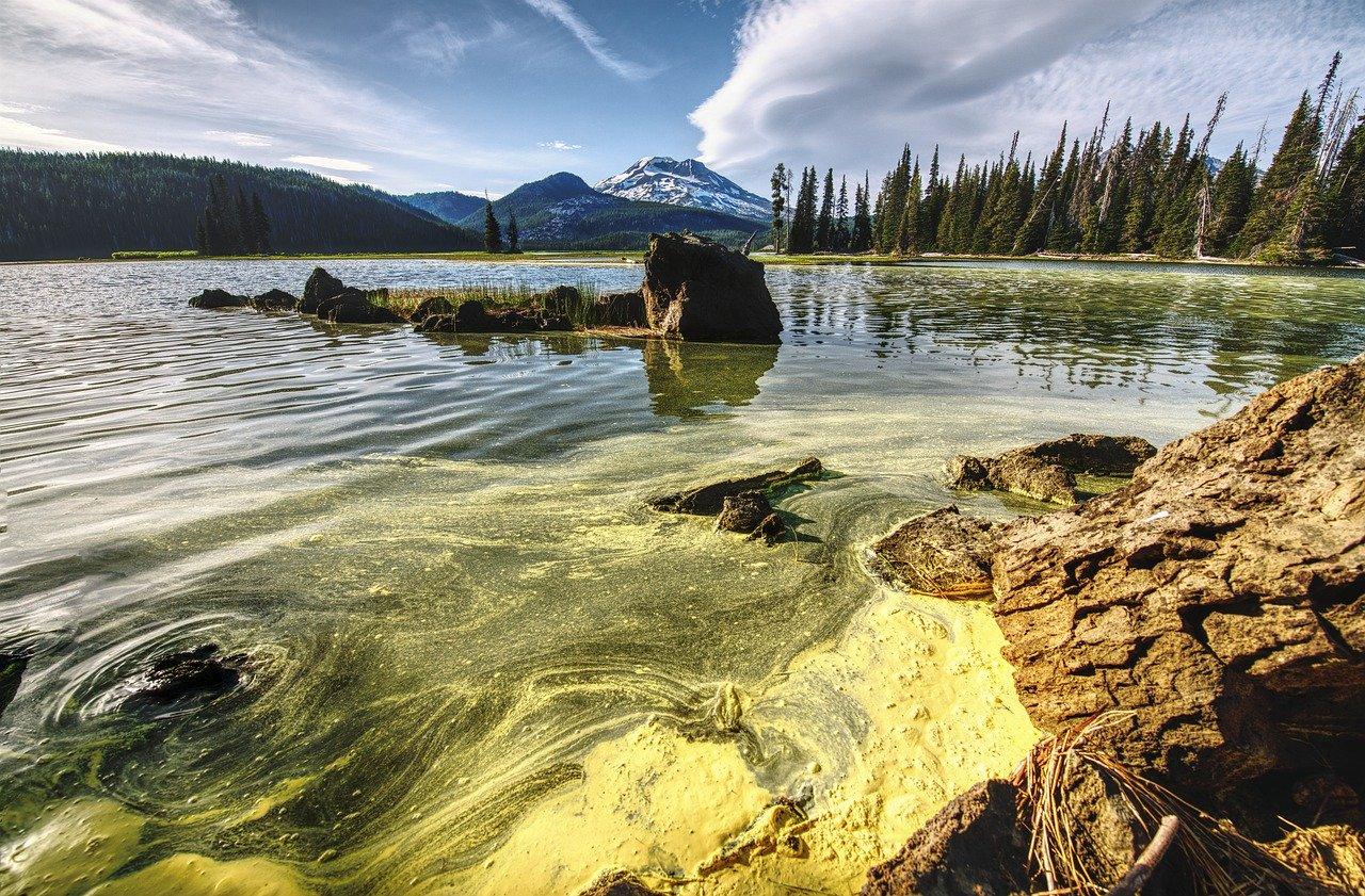Blue-green algae toxicity in dogs   VETgirl Veterinary ...